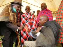 John ole Maitai, a nyangusi elder and chairman of Maasai Council of Elders hands over a leadership rungu to Kajiado Governor Joseph ole Lenku in Gillgil on Thursday evening.
