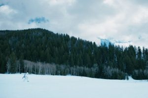 Wind River, Jeremy Renner
