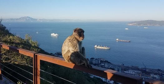 Macaque at Gibraltar
