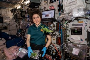 Astronaut Koch growing mustard greens