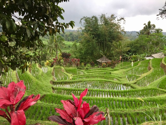 Will ride a bicycle through terraces of rice field like Julia Roberts in Eat Pray Love?