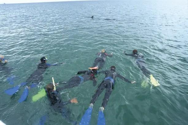 dolphin watching australia