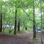 山中湖村営キャンプ場をご紹介。森の中の静かなキャンプ場でリフレッシュ!