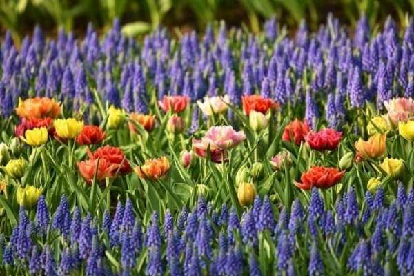 Как да се грижим за цветята в градината през месец Юни. Как да подхраним цветята в градината.