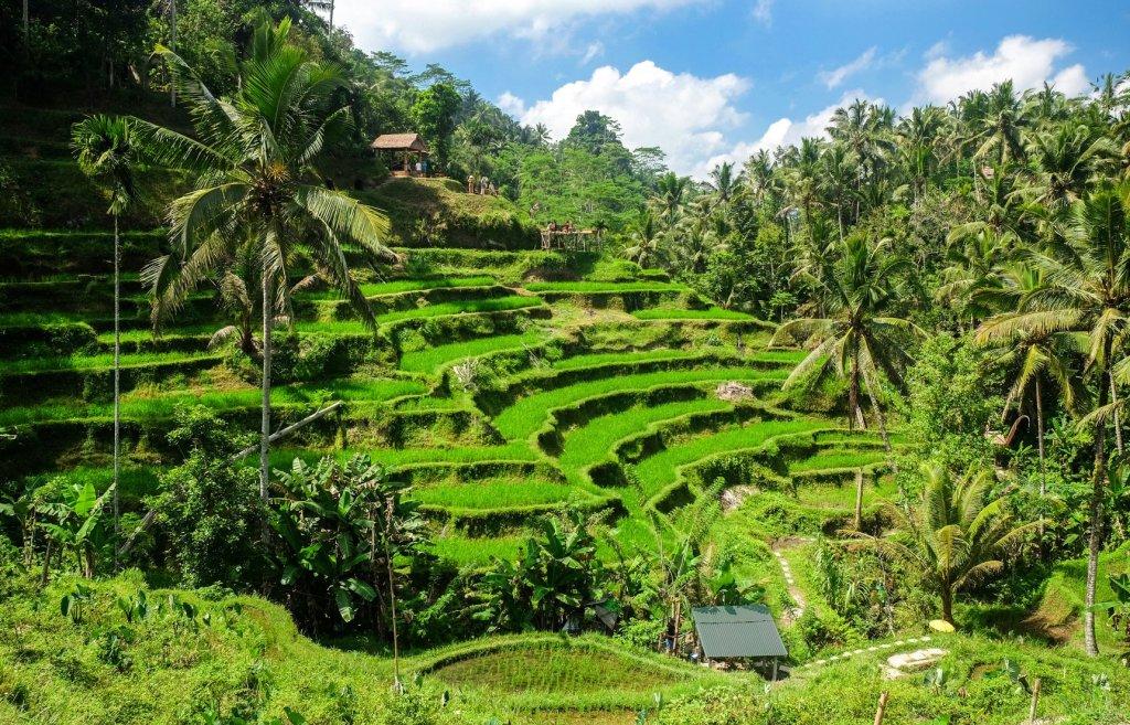 Околните тропически гори и терасовидни оризови площи в околността на град Убуд са сред най-известните пейзажи на Бали.