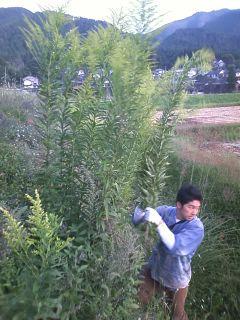 収穫中のハプニング!