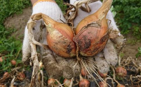 農作業 で レア野菜ゲット!