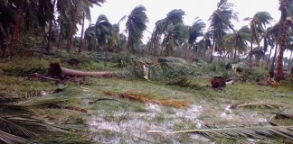 Central government visit Gaja Cyclone hit districts