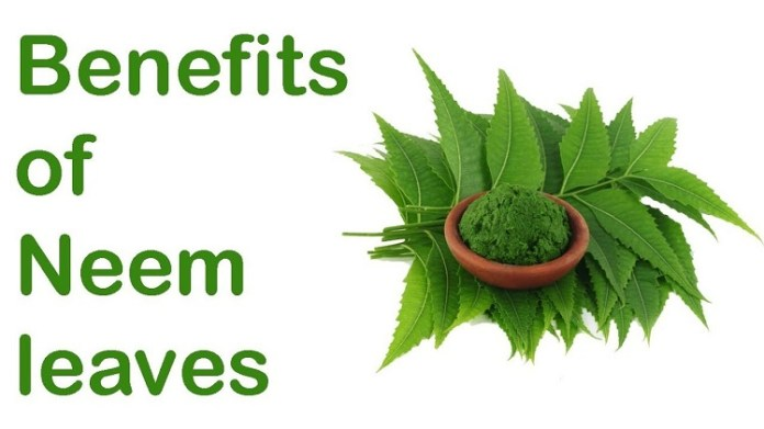 Uses Of Neem Lief