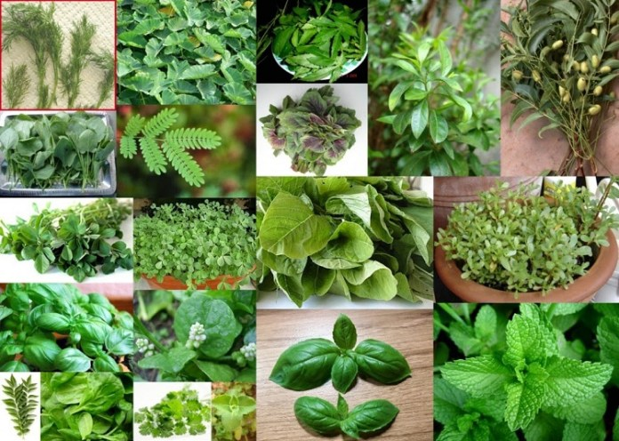 Uses of Greens Healing diabetes. It will give you more strength | Health Tips | Natural Beauty Tips | Beauty Tips | Health Properties
