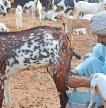 Goat Milk :   Health Tips   Beauty Tips   Daily Health Tips     Top 10 Best Health Benefits   Easy To Follow Daily Health Tips