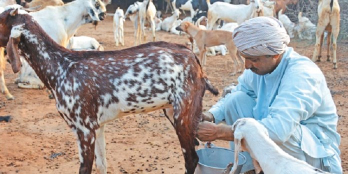 Goat Milk : | Health Tips | Beauty Tips | Daily Health Tips | | Top 10 Best Health Benefits | Easy To Follow Daily Health Tips