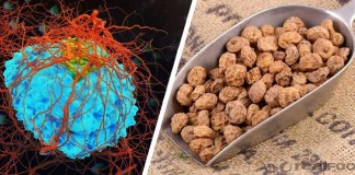 Health Tips For Tiger Nuts : Health Tips, Beauty Tips, Daily Health Tips, Tamil Maruthuvam Tips, Top 10 Best Health Benefits, Daily Health Tips