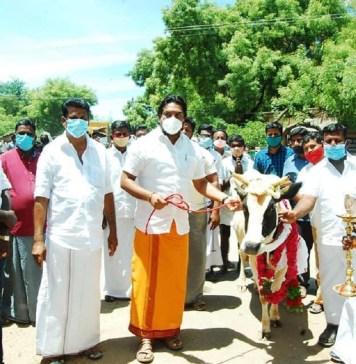 Madurai Cow Video Reflection