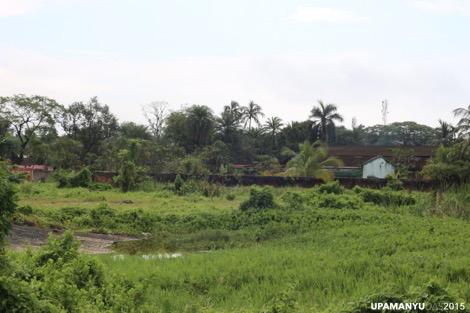 Patuli Landscape 4