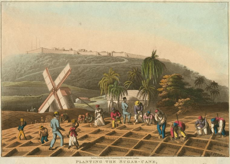 """Planting the sugar-cane"" (Credit: Schomburg Center for Research in Black Culture, Photographs and Prints Division, The New York Public Library)."