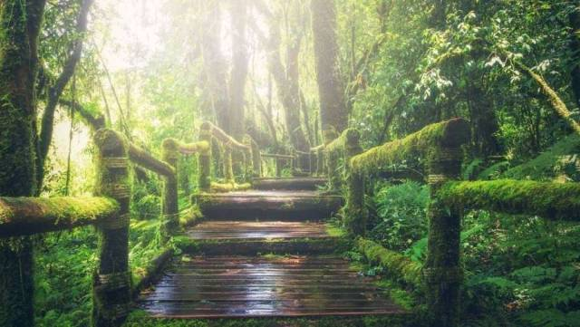 Green Path. Original image by Pixabay.