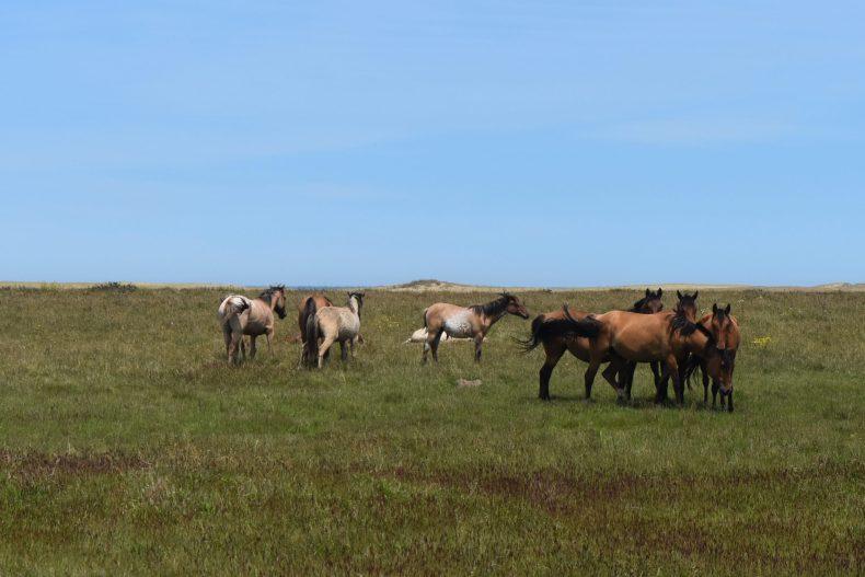 wild-horses-laguna-de-rocha