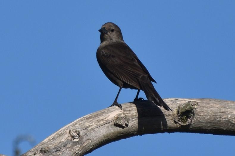 greyish-bird-on-branch-solis-de-mataojo