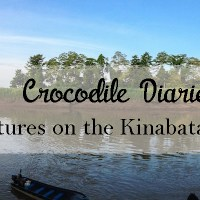 Crocodile Diaries: Adventures On the Kinabatangan River in Borneo