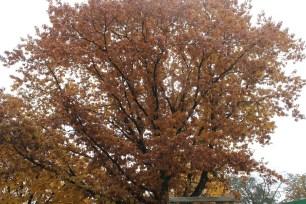 German Tree | Kaleidoscope City | www.kaleidoscopecity.wordpress.com/blog