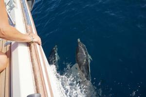 Delphine bei Tadeja