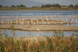 Cagliari, Flamingos