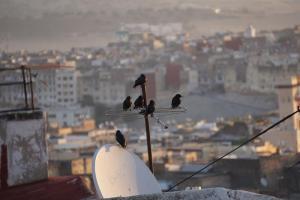 Fes, künstlerisches Stilleben mit Vogel, Dachterasse und Satellitenschüssel vor der Medina
