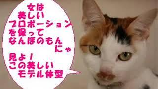 プレーリードッグのダイエット − アフィリエイト動画まとめ