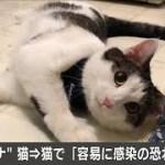 新型コロナがネコからネコに容易に感染 東大など(20/05/14) − アフィリエイト動画まとめ