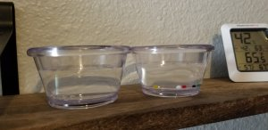 picture of humidor beads and sensory beads in water, pre-absorption