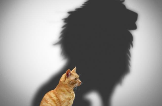 Το Θάρρος