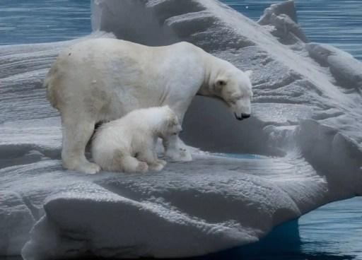 λιωσιμο παγων κλιματικη αλλαγη