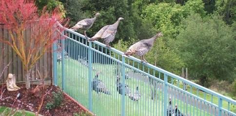 Turkey on the Fence