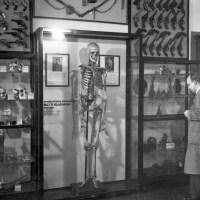 Kalloja ja kriminaaliantropologiaa Rikosmuseossa