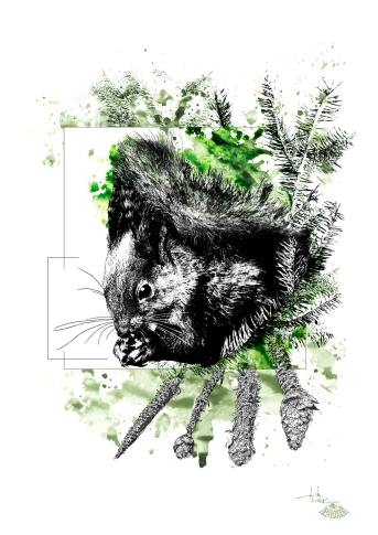 """""""Sciurus Vulgaris"""" (Das Eichhörnchen) – Illustration aus der Serie HelvEdition von Ka L-O-K   Graphic Arts"""