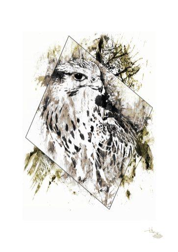 """Falco Cherrug"" (Faucon) – HelvEdition by Ka L-O-K"