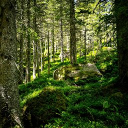 Mystical Woods - pic by Ka L-O-K