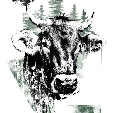"""Bos Taurus"" (La Vache) – Illustration de la série HelvEdition de Ka L-O-K 