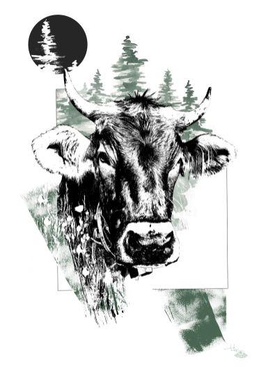 "Illustration ""Bos Taurus"" (La Vache) – HelvEdition de Ka L-O-K   Graphic Arts"