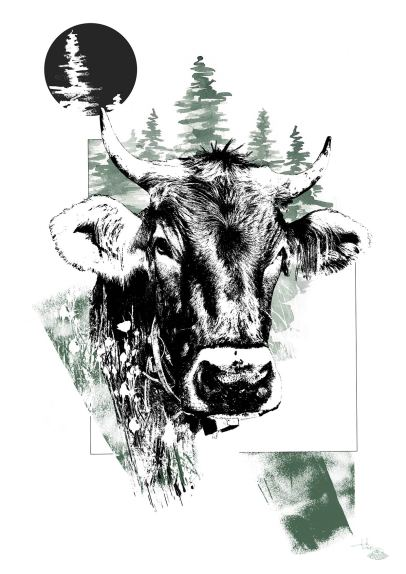 "Illustration ""Bos Taurus"" (La Vache) – HelvEdition de Ka L-O-K 
