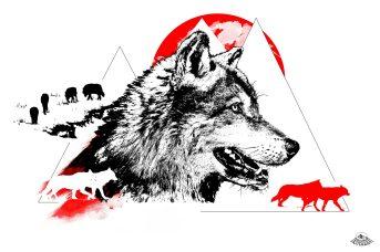 """Illustration HelvEdition """"Canis Lupus"""" – Le Loup, crée en 2021 par Ka L-O-K"""