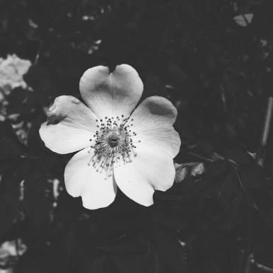 Spring Flower | Fleur de printemps | Frühlingsversprechen