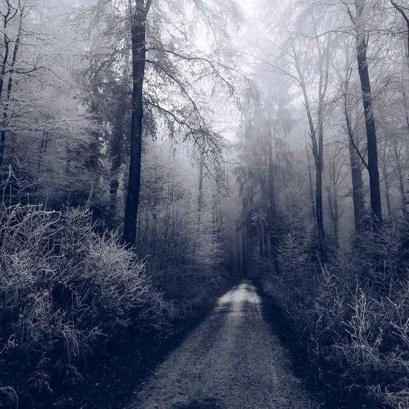 Forest   Forêt   Wald, Biel/Bienne