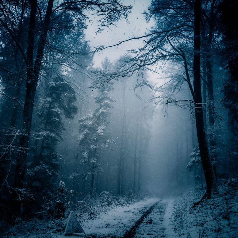Dark Forest by Ka L-O-K