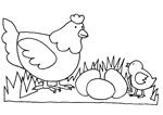 Proteiner i fjerkræ