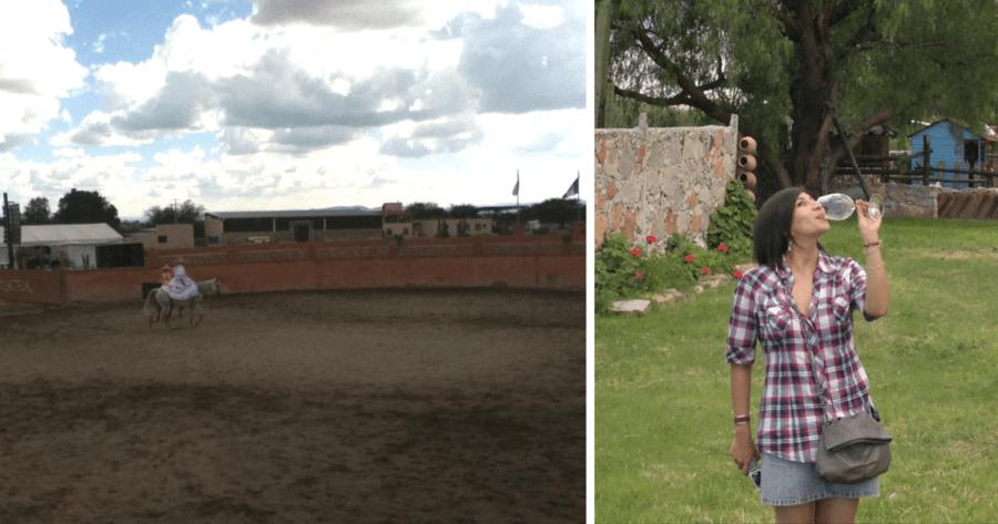 Viñedos Azteca en Querétaro. Foto: Myrla Treviño