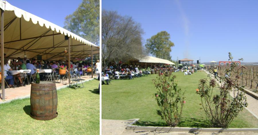Viñedos La Redonda en Querétaro. Foto: Myrla Treviño