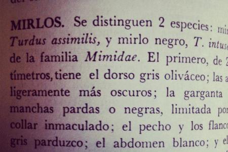 Qué es el storytelling - Myrla Treviño