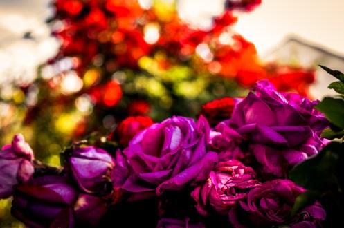 Manufaktura Różana w Starej Wsi koło Końskowoli - wizyta studyjna LGD Gościniec 4 Żywiołów w LGD Zielony Pierścień - fot. Andrzej Famielec | Kalwaria 24